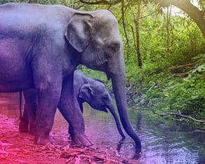 Thaïland-elephant