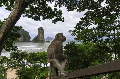 Ao Nang en famille - voir des singes en thailande - plage - enfant