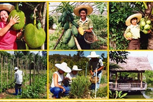 Chiang Mai en famille - activité - cuisine thai - specialité thailandaise - visiter une ferme en thailande