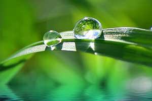 conseil voyage thailande-santé-hopital-feuille-vert-goutte-eau-rosée-matin