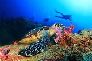 Plongée Thailande - Thailande avec des enfants - fons marins - poissons