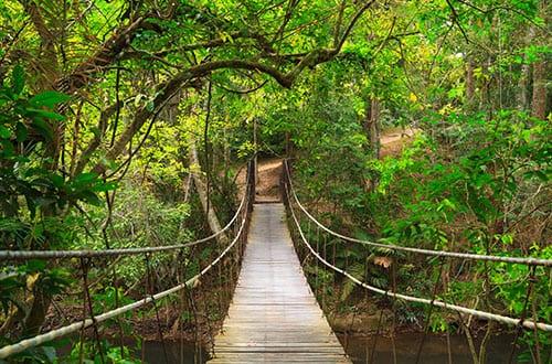Parc Naturel en Thailande - Khao Yai avec des enfants - pont suspendu - jungle - aventure