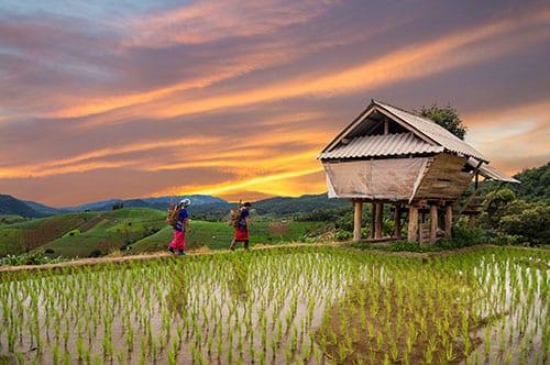 Chiang Rai en famille - excursion - visiter la Thailande - rizière - paysage