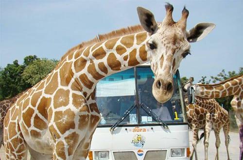 Kanchanaburi avec des enfants - activité -zoo thailande