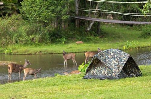 Parc Naturel en Thailande - Khao Yai avec des enfants - camping - jungle - aventure