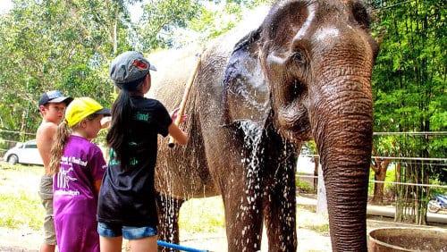 hua hin en famille-excursion hua hin-voir des éléphant en thailande