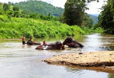 chiang mai en famille-excursion avec des enfants a chiang mai-voir des elephants