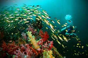 initiation plongée sous marine thailande