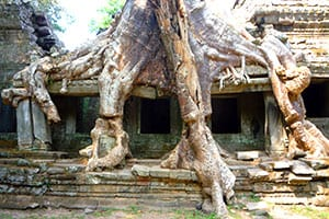 vestige-ruine-nature-Voyage en famille au Cambodge