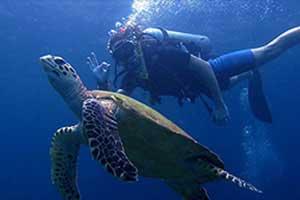 tortues thailande - plongée en famille sud thailande