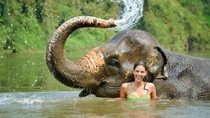 ao nang en famille-excursion elephant
