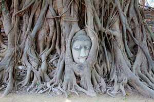 activités à Ayutthaya avec des enfants-excursion à Ayutthaya - tête de Bouddha