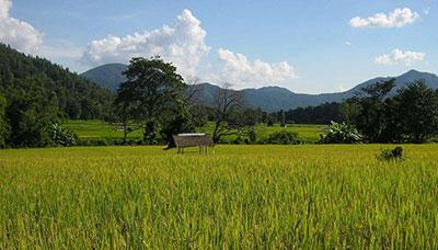 hotel francais thailande-chiang mai-nature-calme-paysage-montagne-riziere